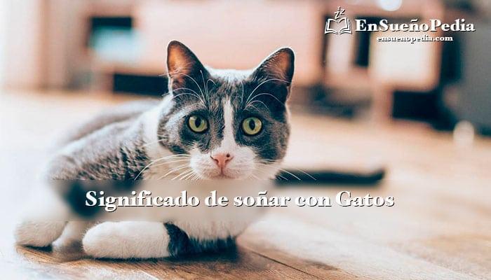significado-de-sonar-con-gatos
