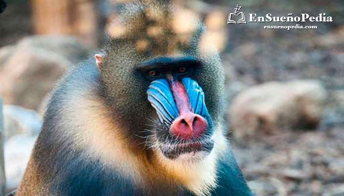 sueno-con-monos