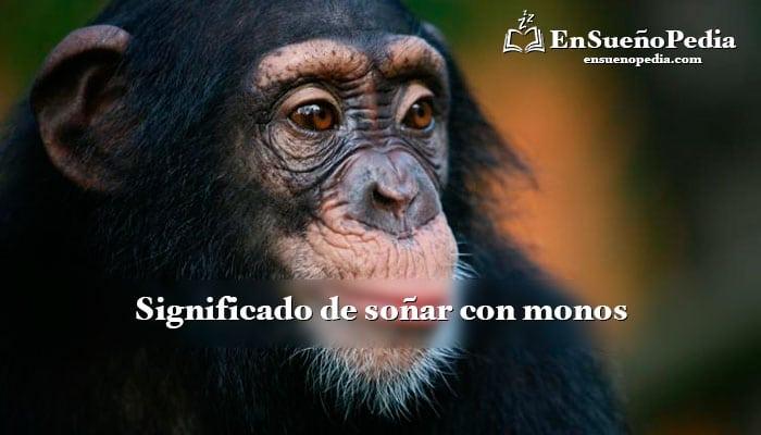 sonar-con-simios