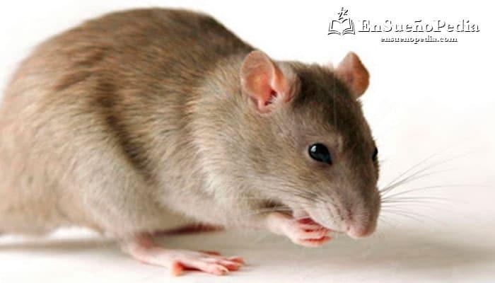 sonando-con-ratas-significado