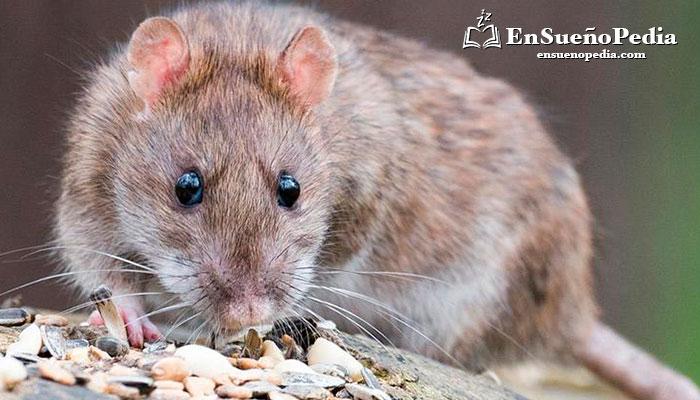 sonando-con-rata-comiendo