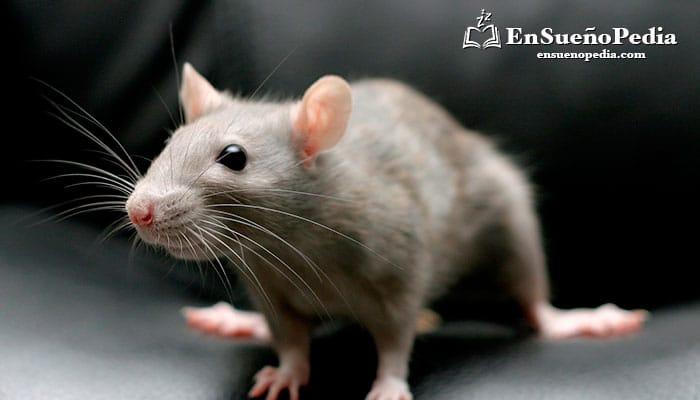 significado-de-sonar-con-rata