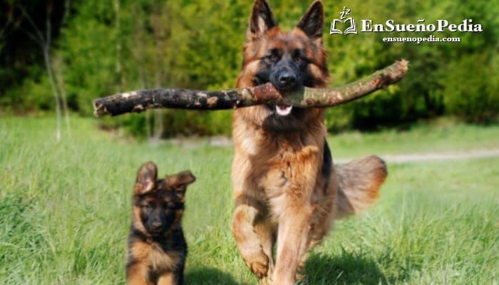 sueno-con-perro