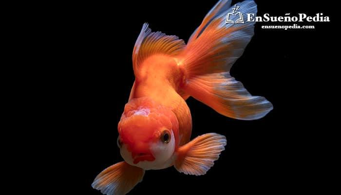 significado-de-suenos-con-peces