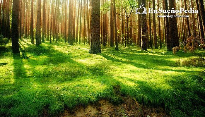 significado-sonar-con-bosque