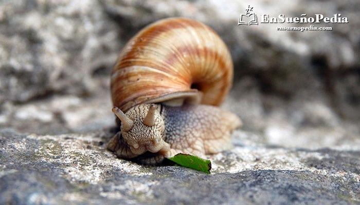 significado-sonar-con-caracoles